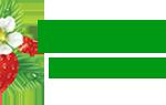 Шиповник: польза и вред для здоровья организма