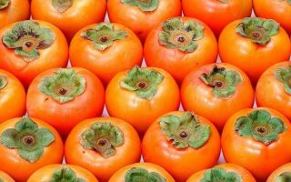 Хурма: польза и вред для здоровья организма