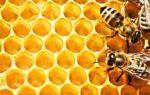 Какие витамины содержатся в меде и чем он полезен?
