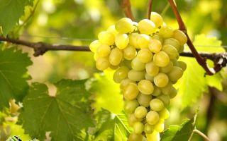 Какие витамины содержатся в винограде: состав и норма употребления