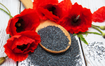 Семена мака: польза и вред для здоровья