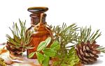 Хвоя сосны: лечебные свойства и противопоказания