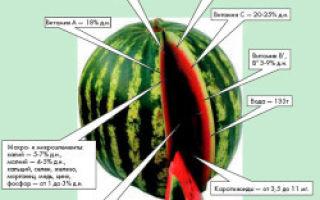 Какие витамины в арбузе и чем он полезен?