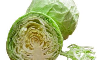 Белокочанная капуста: польза и вред для организма
