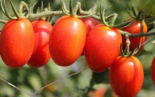Какие витамины в помидорах: влияние на организм и польза томатов