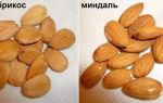 Какие витамины в абрикосе: уникальный состав и полезные свойства