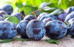Какие витамины содержатся в сливе: энергетическая ценность и польза для организма