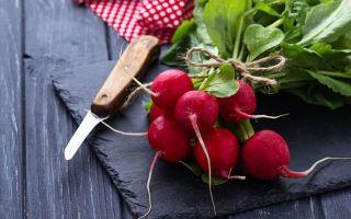 Какие витамины в редиске: влияние на организм и состав