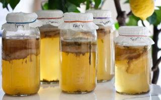 Гриб шиитаке: польза и вред для здоровья