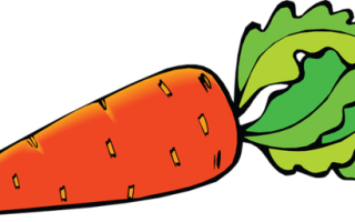 Какие витамины содержатся в моркови: польза и вред овоща для организма