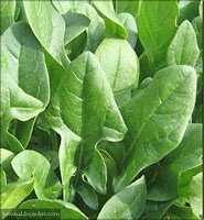 Какие витамины в зелени?