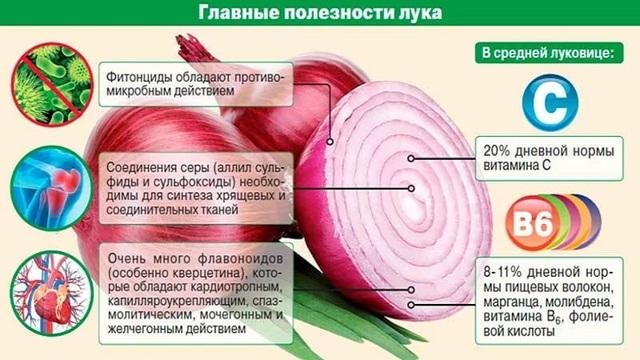 Какие витамины содержатся в луке (репчатом и зеленом)?
