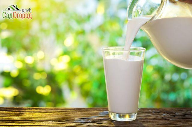 Какие витамины в козьем молоке?