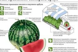 Какие витамины в арбузе?