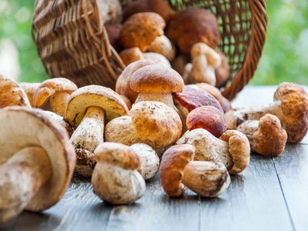 Какие витамины в грибах?