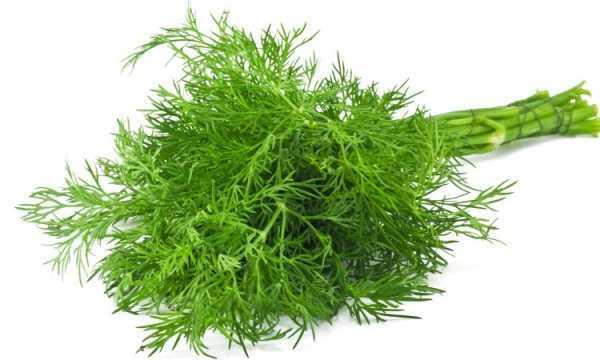 Какие витамины в укропе?