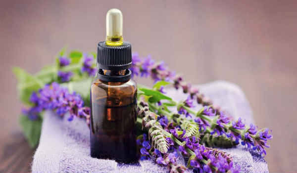 Шалфей: лечебные свойства и противопоказания
