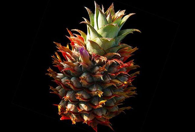Как хранить ананас в домашних условиях