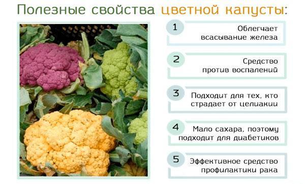Цветная капуста: польза и вред для здоровья