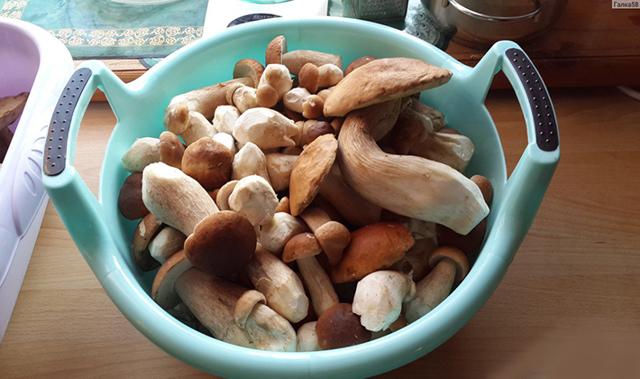 Белый гриб: польза и вред для организма