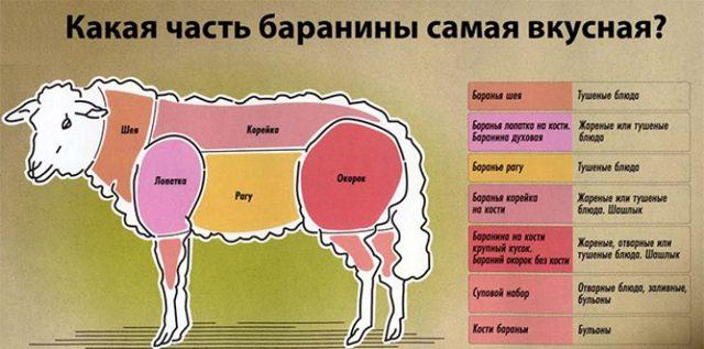 Баранина: польза и вред для организма