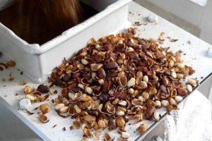 Как чистить кедровые орехи в домашних условиях