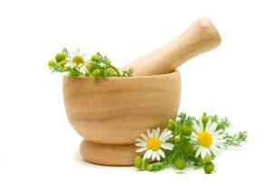 Настой ромашки: польза и вред для здоровья