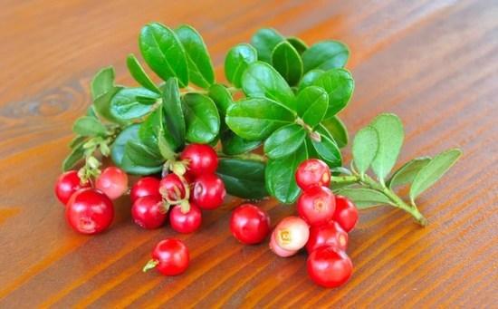 Чай из листьев брусники: польза и вред для организма