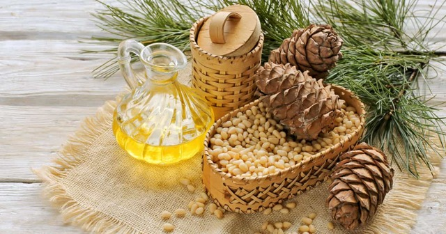 Кедровое масло: польза и вред для организма