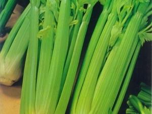 Сельдерей: польза и вред для здоровья организма