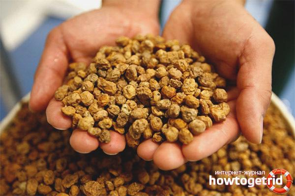Земляной орех чуфа: польза и вред