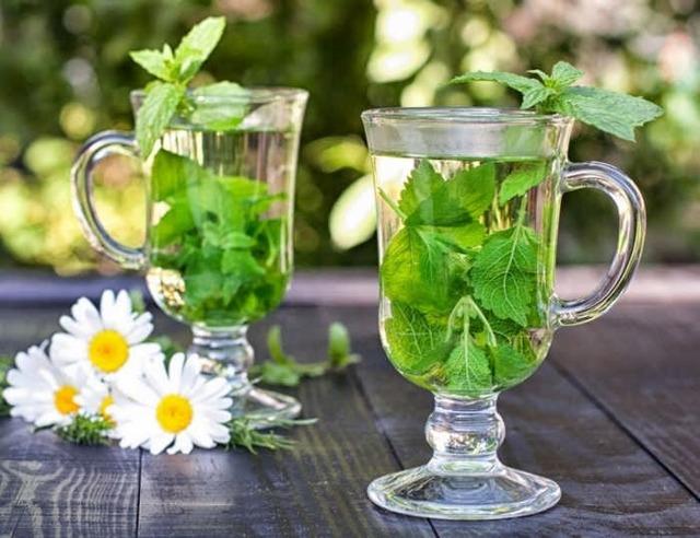 Чай с мелиссой: польза и вред для здоровья