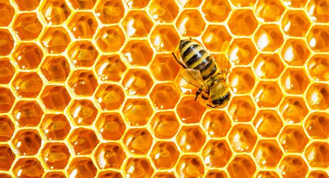 Мед в сотах: польза и вред для организма