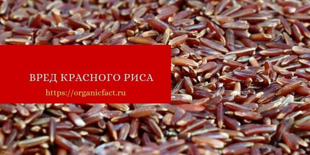 Красный рис: польза и вред для здоровья