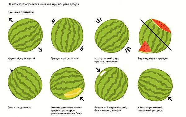 Арбуз: польза и вред для здоровья организма