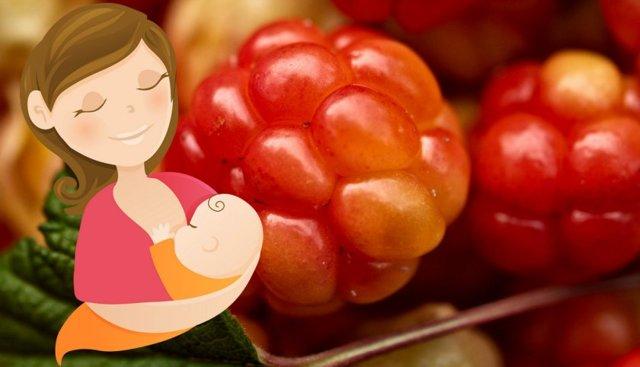 Морошка: польза и вред для здоровья человека