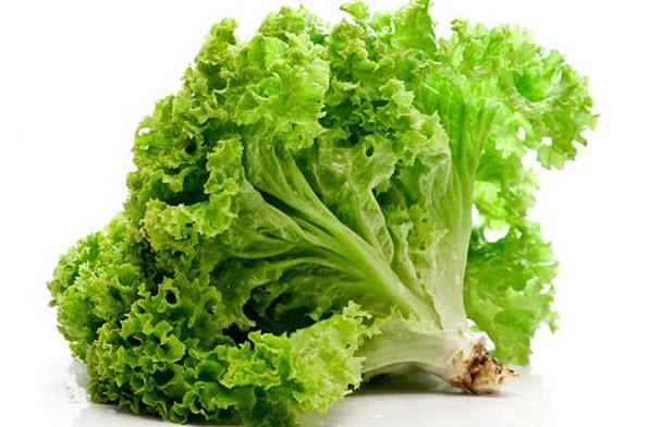 Листовой салат: польза и вред для здоровья