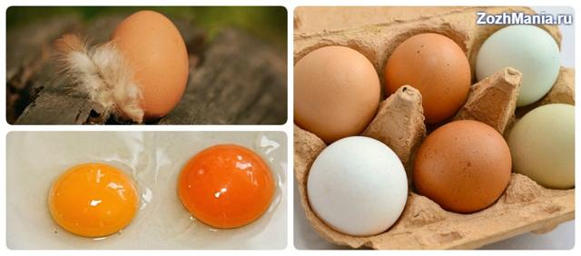 Яйца всмятку: польза и вред для здоровья