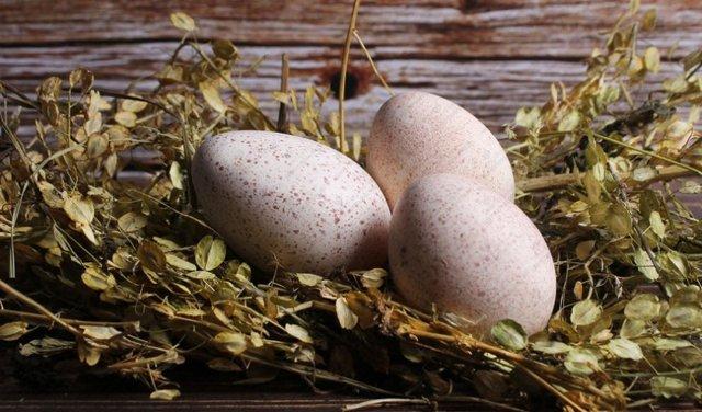 Индюшиные яйца: польза и вред для здоровья