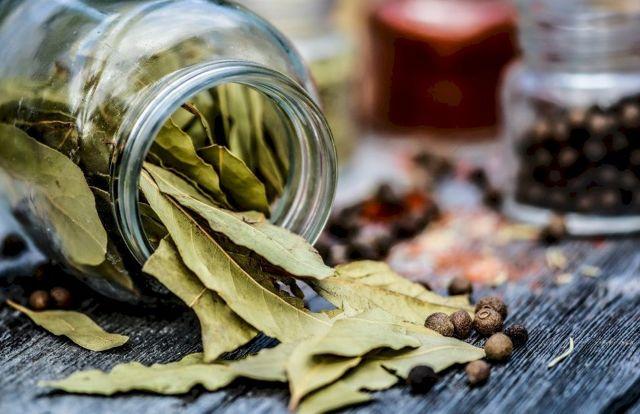 Лавровый лист: польза и вред для здоровья