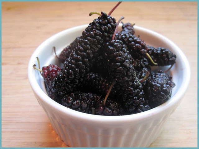 Шелковица: польза и вред для здоровья организма