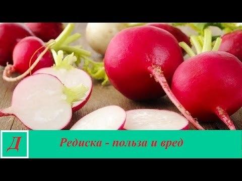 Редиска: польза и вред для здоровья организма