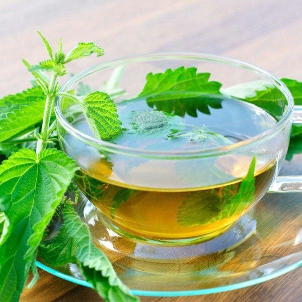 Чай из крапивы: польза и вред для здоровья