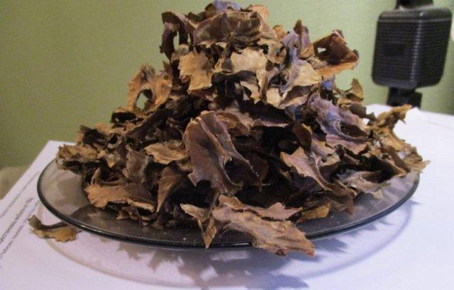 Чем полезны перегородки грецкого ореха
