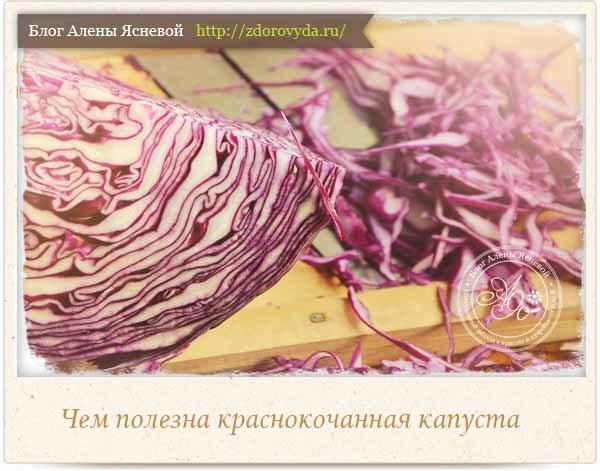 Краснокочанная капуста: польза и вред для здоровья