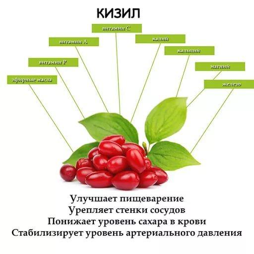 Кизил: польза и вред для здоровья организма