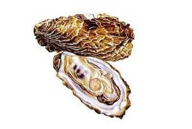 Устрицы польза и вред для организма человека