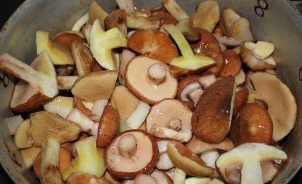 Грибы маслята: вред и польза для организма