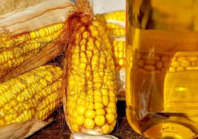 Кукурузное масло: польза и вред для организма