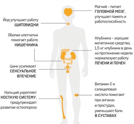 Клубника: польза и вред для здоровья организма